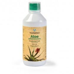 Vonderweid Aloe Arborescens...