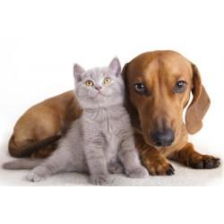 Integratori Alimentari Naturali per Animali